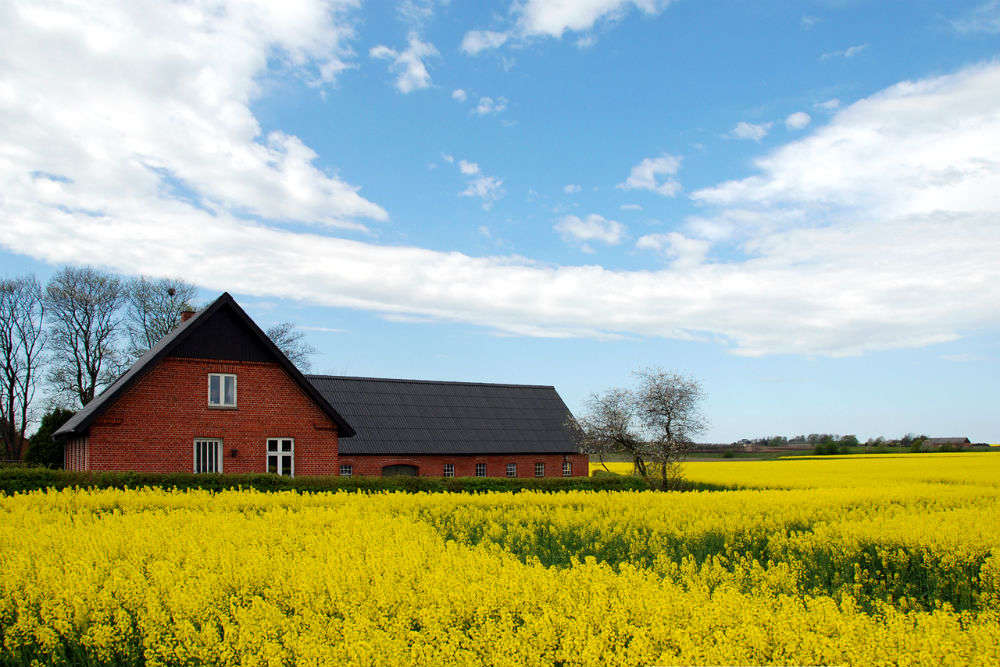The rapeseed fields of Luoping: a visual fiesta