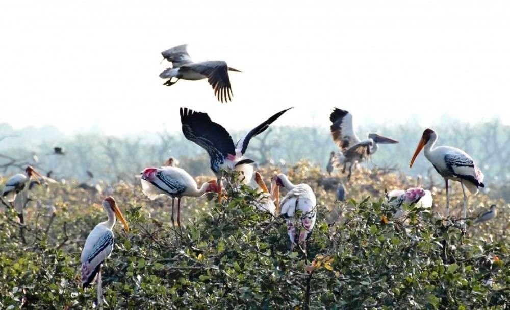 Vedanthangal—India's oldest bird sanctuary