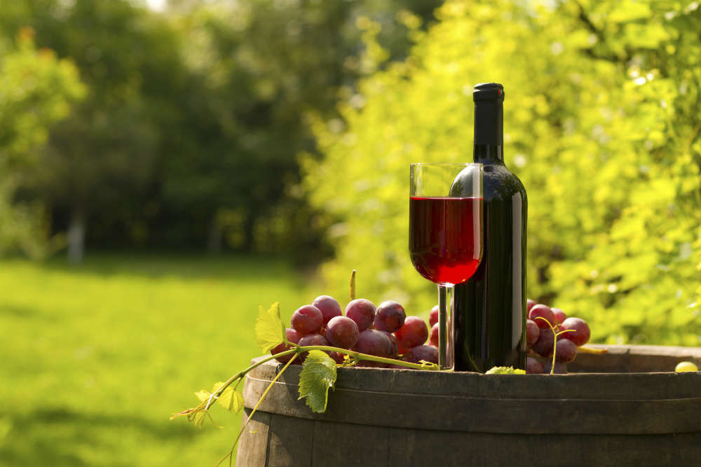 A trip to Nashik's best vineyards