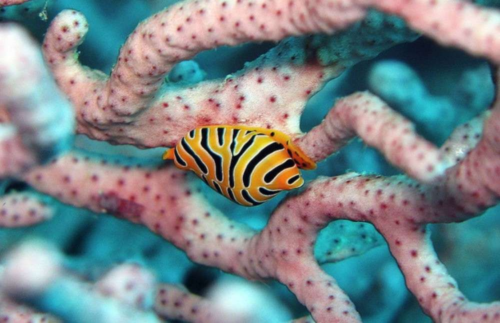 Andaman Sea reefs