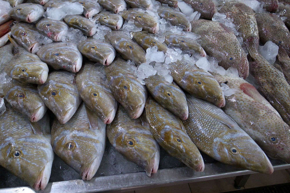 Port Zayed Fish Market