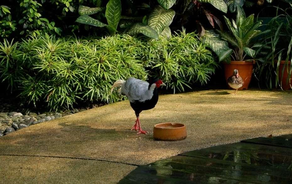 Kuala Lumpur's green oases