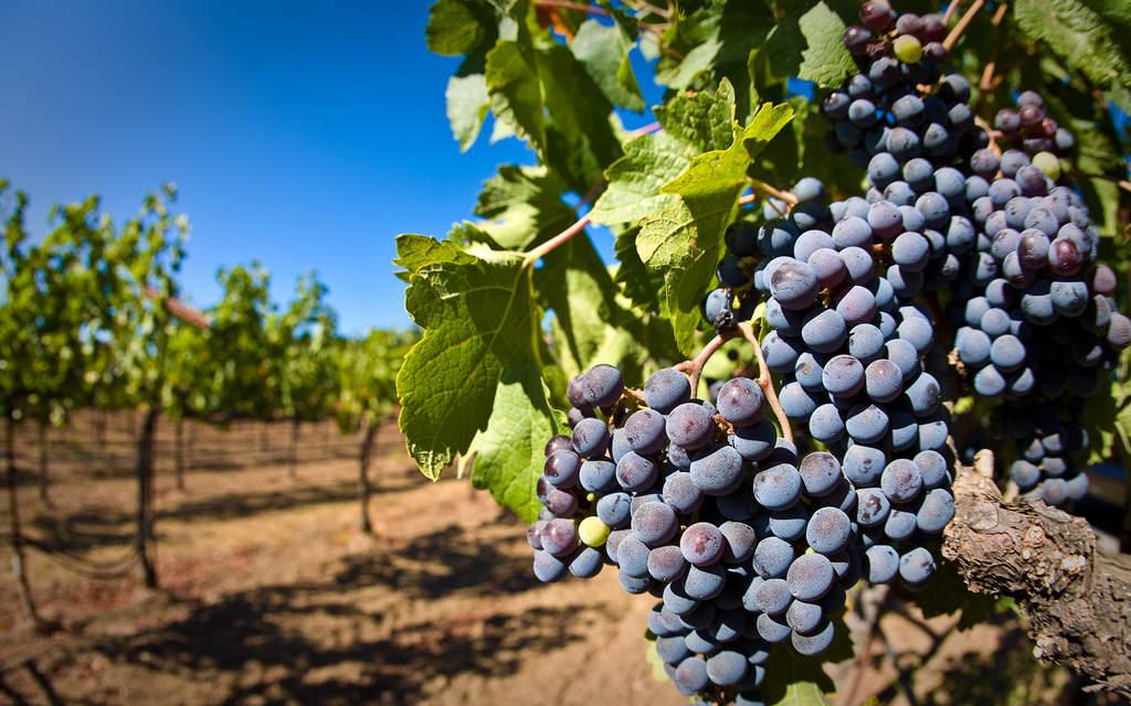 Go wine-tasting in Napa Valley