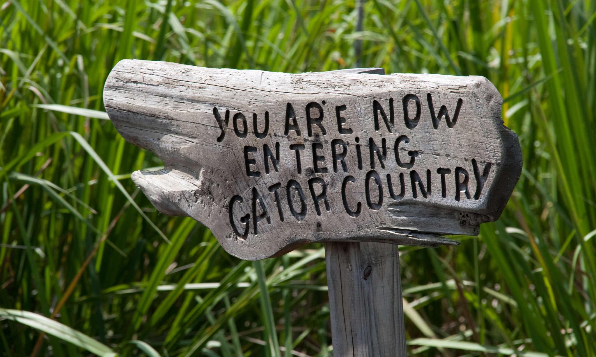 Explore the Swamp