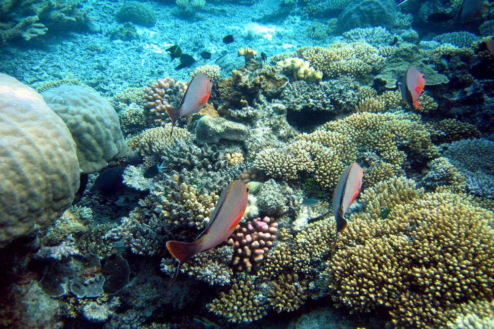Snorkeling adventures in Australia
