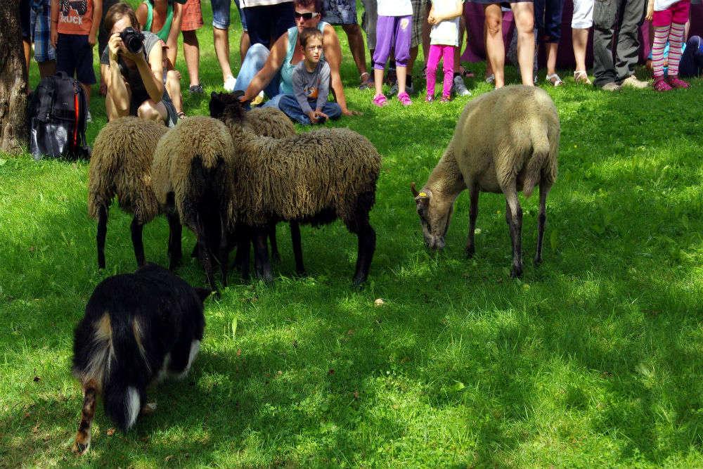 Idaho's Trailing of the Sheep Festival