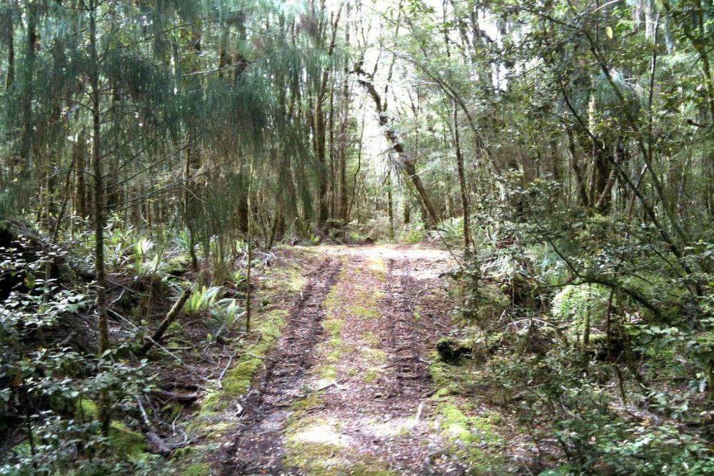 Tiropahi Track