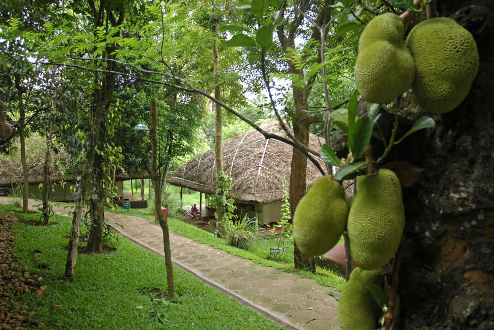 Gorgeous eco-friendly resorts in India for nature lovers
