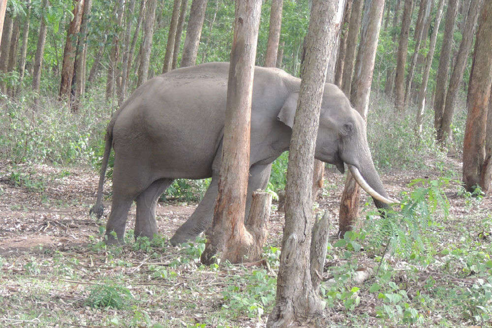Muthanga Wildlife Sanctuary