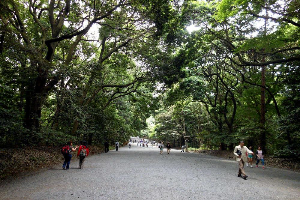 Bask in the calm Meiji Jingu Shrine