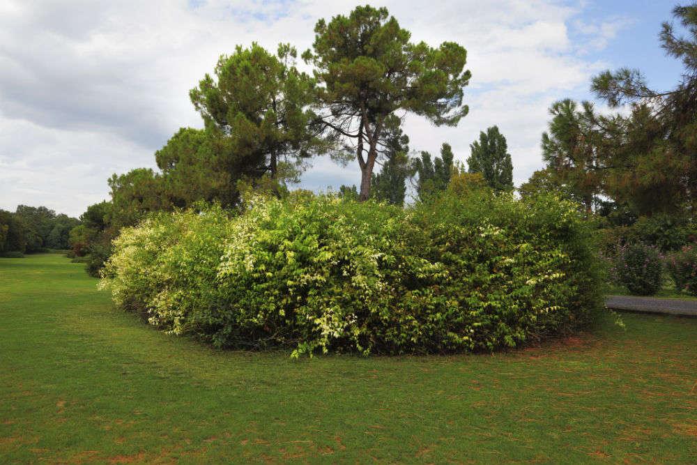 Como Gardens