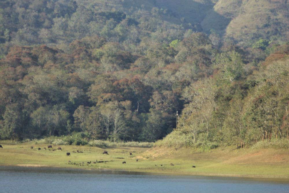 Top ways to explore Periyar Tiger Sanctuary