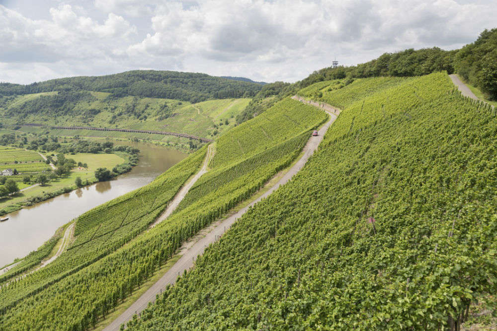 Wines of Mosel