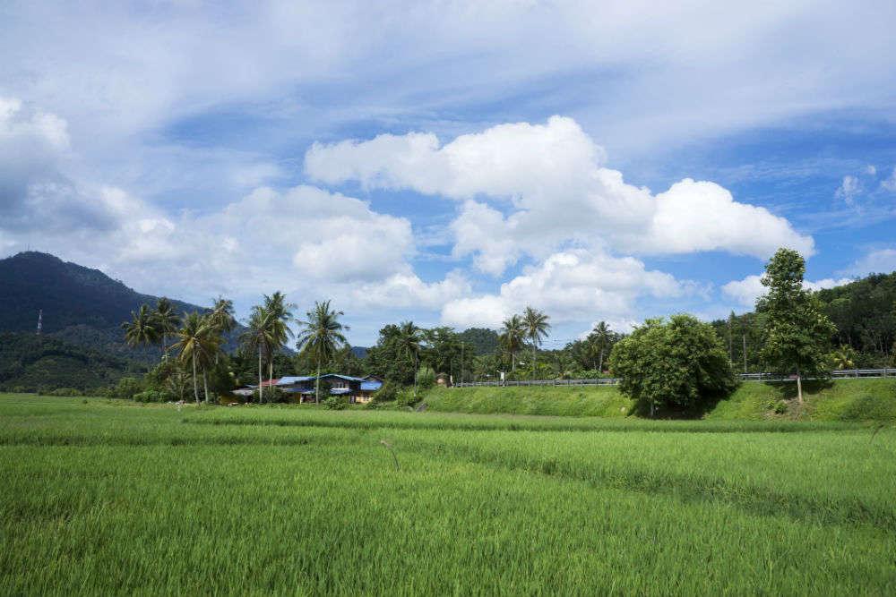 Laman Padi Rice Garden