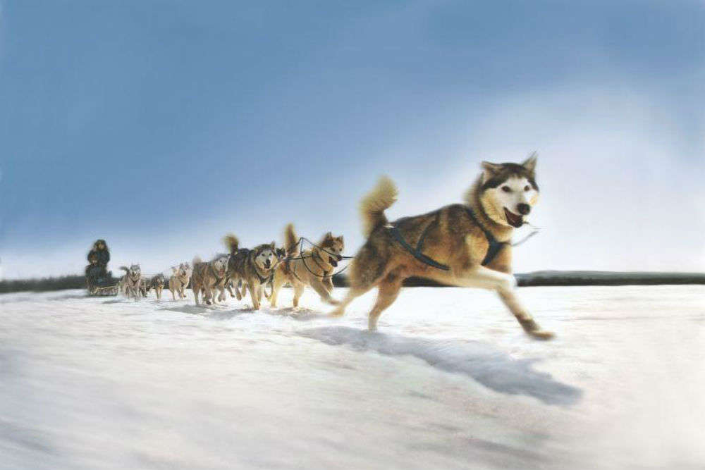 Dog Sledding in Alaska and Maine
