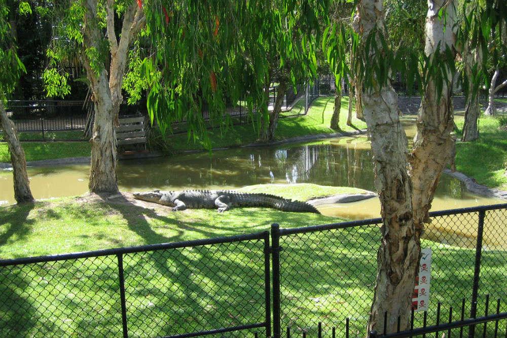 Croc fights at Steve Irwin's Australia Zoo