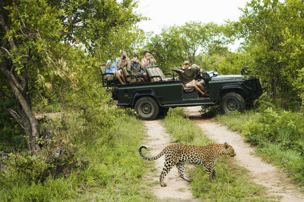 5 best places to see wildlife in South Africa