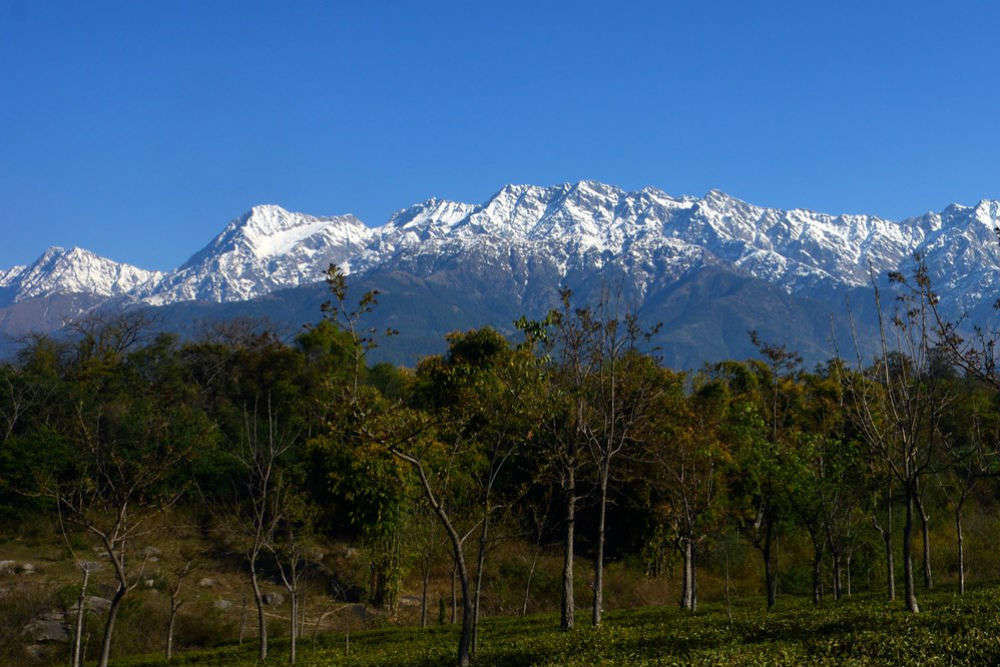 Popular places to visit in and around Palampur