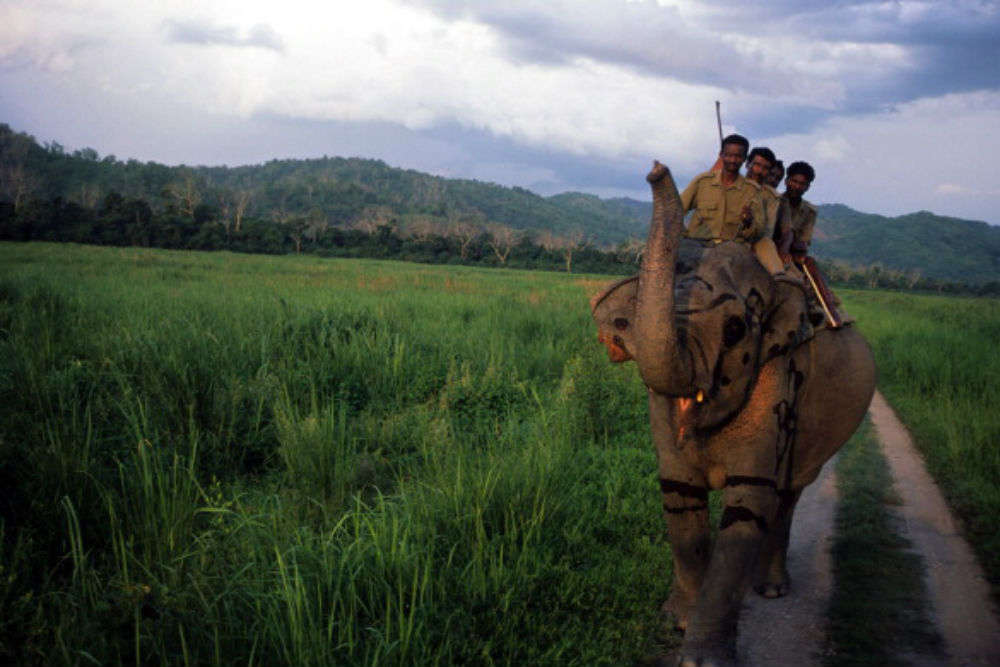 A guide to safari in Kaziranga National Park