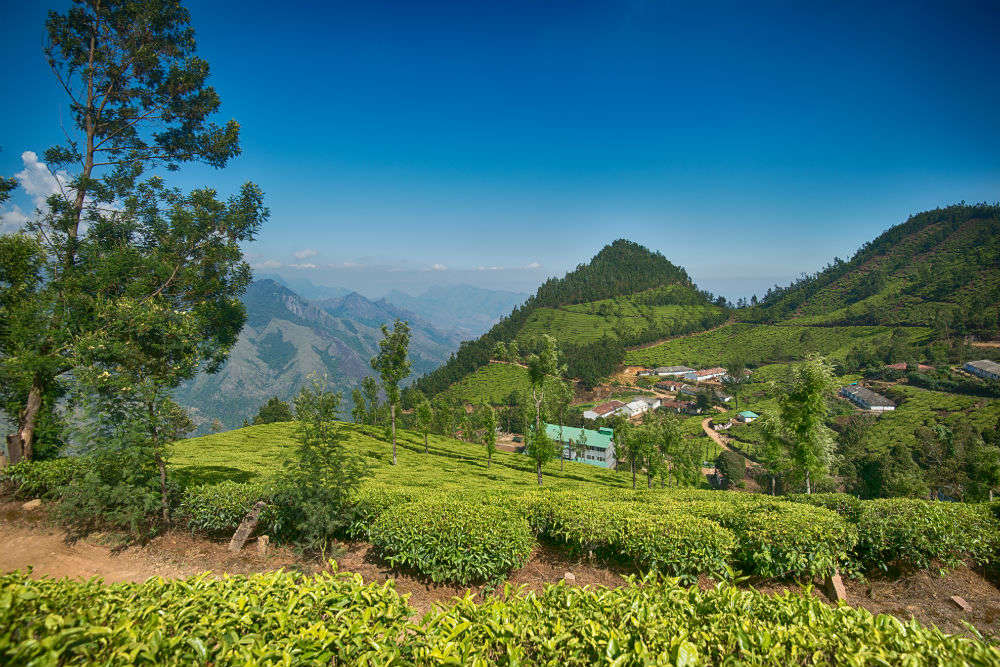 Popular things to do in Munnar
