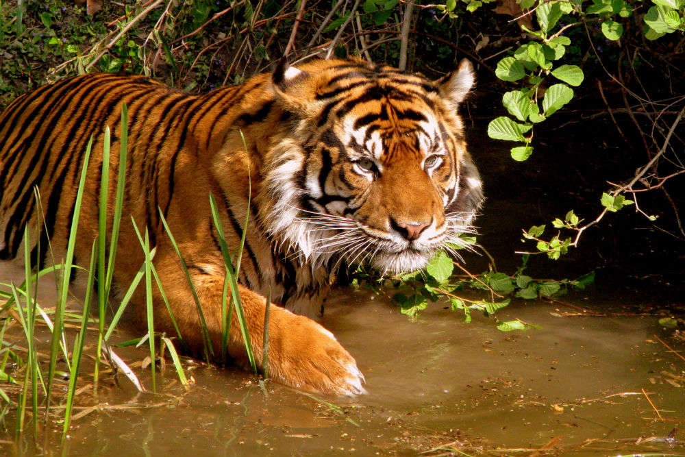 Tiger spotting, river rafting and mystery hunting in Assam—an exhaustive guide to all the things to do