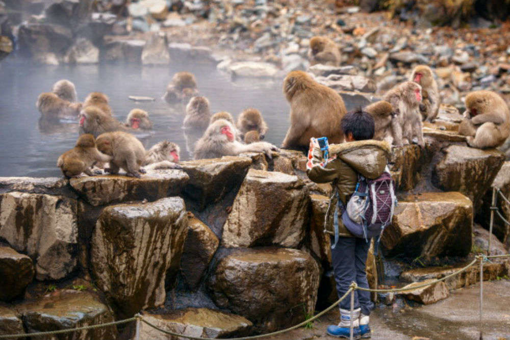 Do you know about the obedient monkeys of the Monkey Park of Japan?
