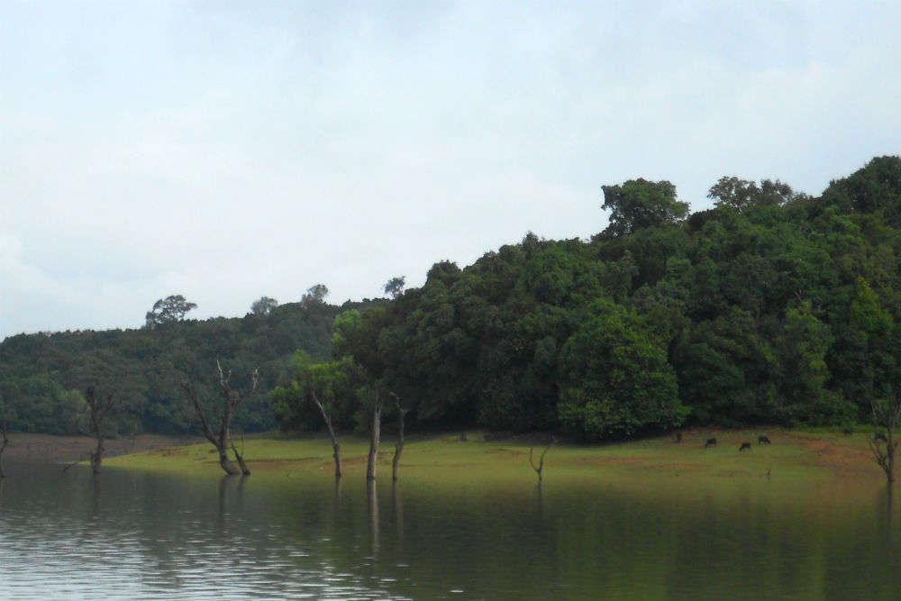 Sharavathy backwaters