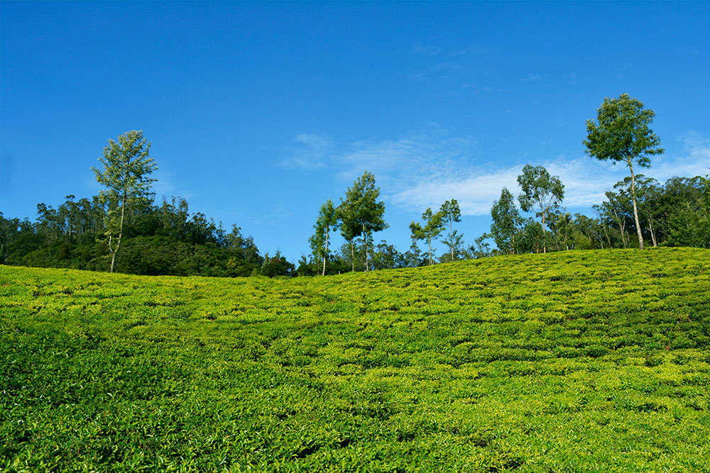 Ooty in pictures