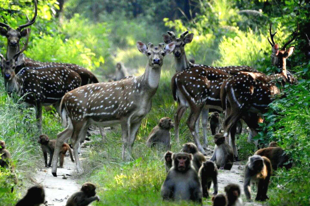 Tales from the Dudhwa National Park