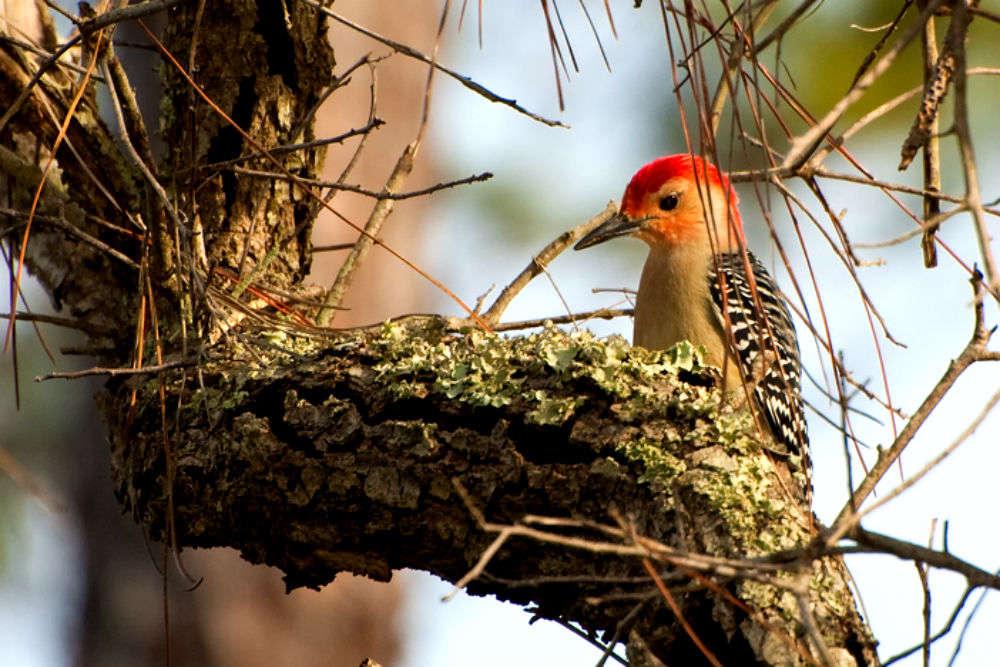Popular birdwatching destinations in and around Delhi