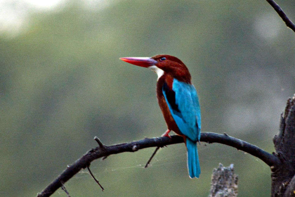 National Chambal Gharial Wildlife Sanctuary