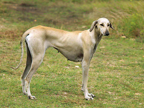 Ban on import of foreign dog breeds evokes mixed reactions