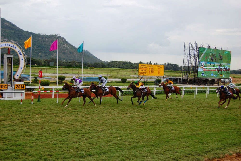 Spend a day at the races