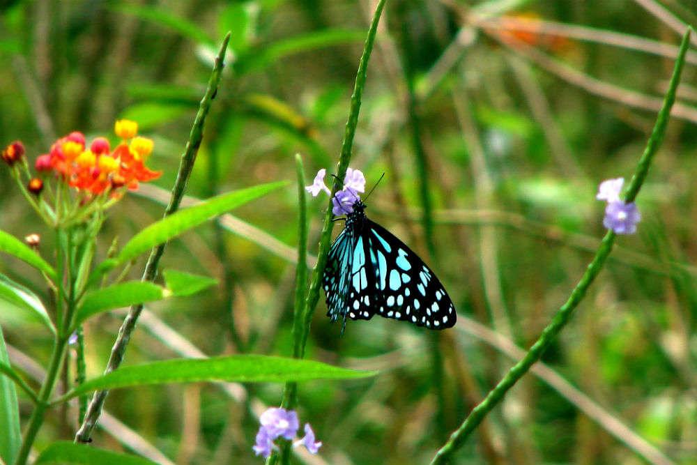 Karanji Kere Butterfly Park