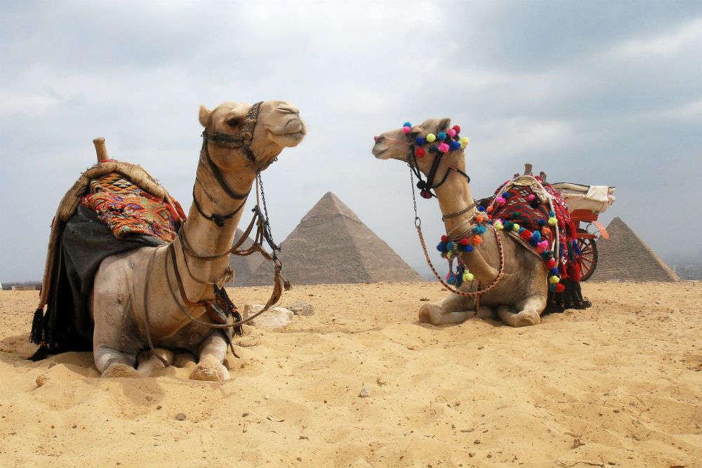 Camel rides at Giza Pyramid