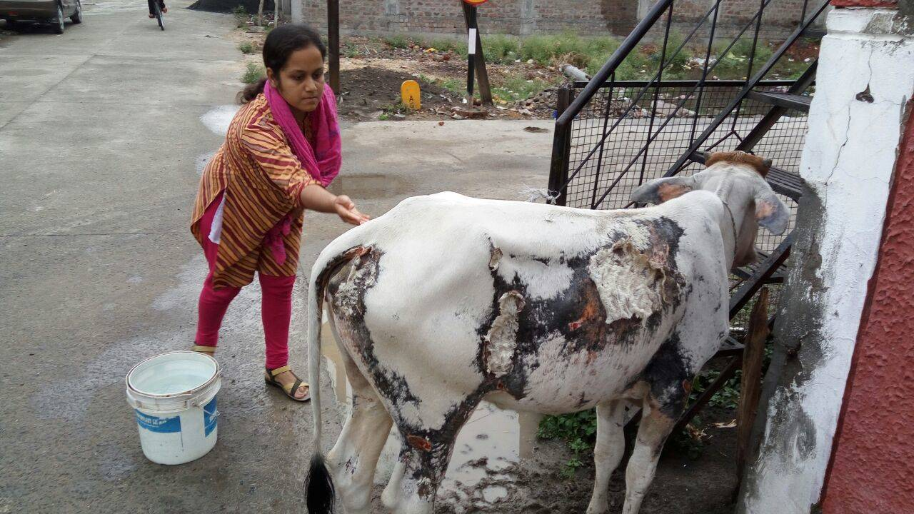 hindi nibandh on cow 'गाय' का मनुष्य के जीवन में बहुत महत्त्व है। गाय का पूरी दुनिया में ही काफी महत्त्व है, लेकिन भारत में गाय को देवी का दर्जा प्राप्त है.