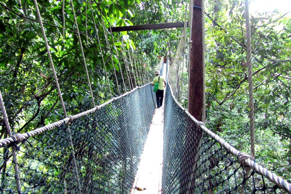 Taman Negara: Malaysia's wild side