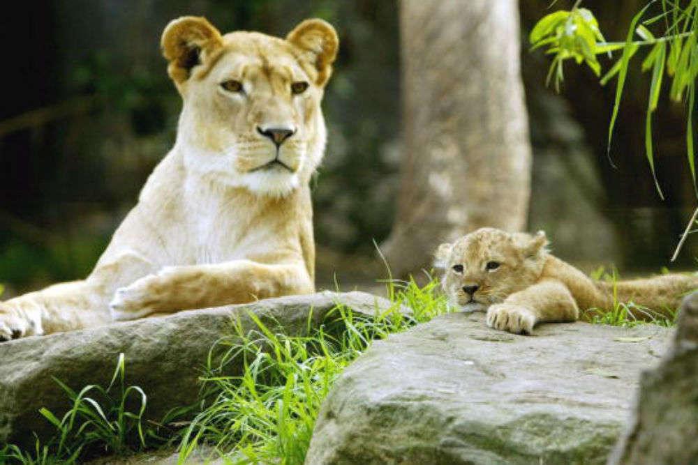 Wild Life Sydney Zoo