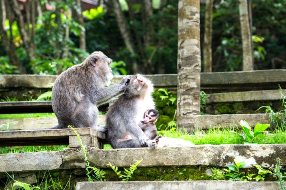 Ubud and the Monkey Forest