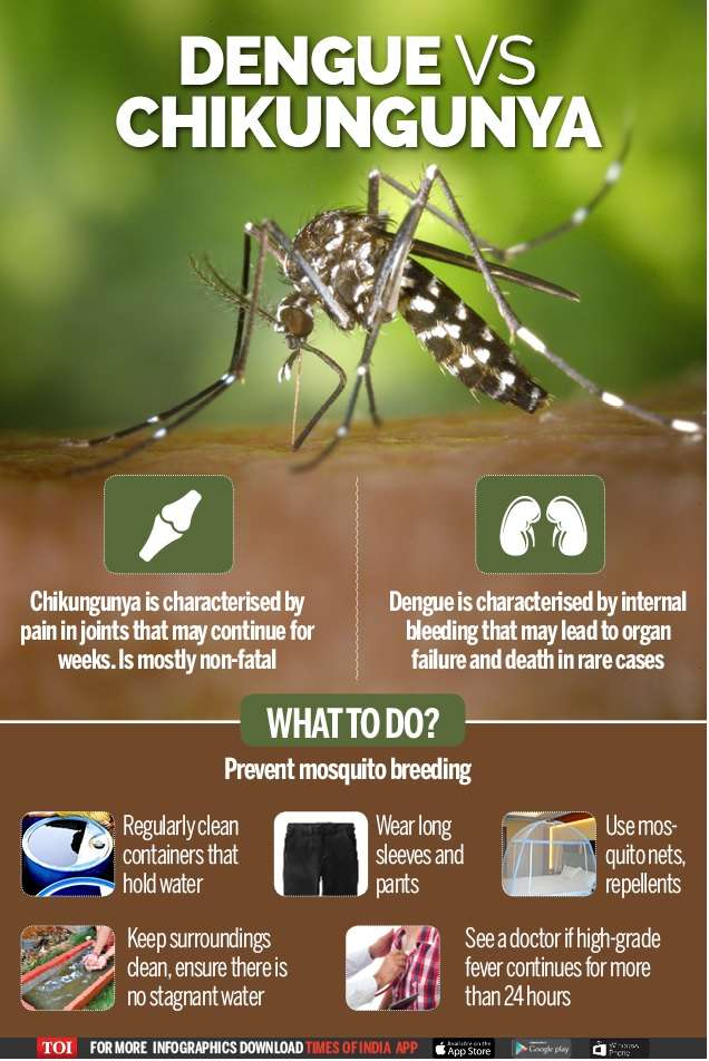 Marvelous Chikungunya Dengue And Chikungunya Symptoms And Dos And Ibusinesslaw Wood Chair Design Ideas Ibusinesslaworg