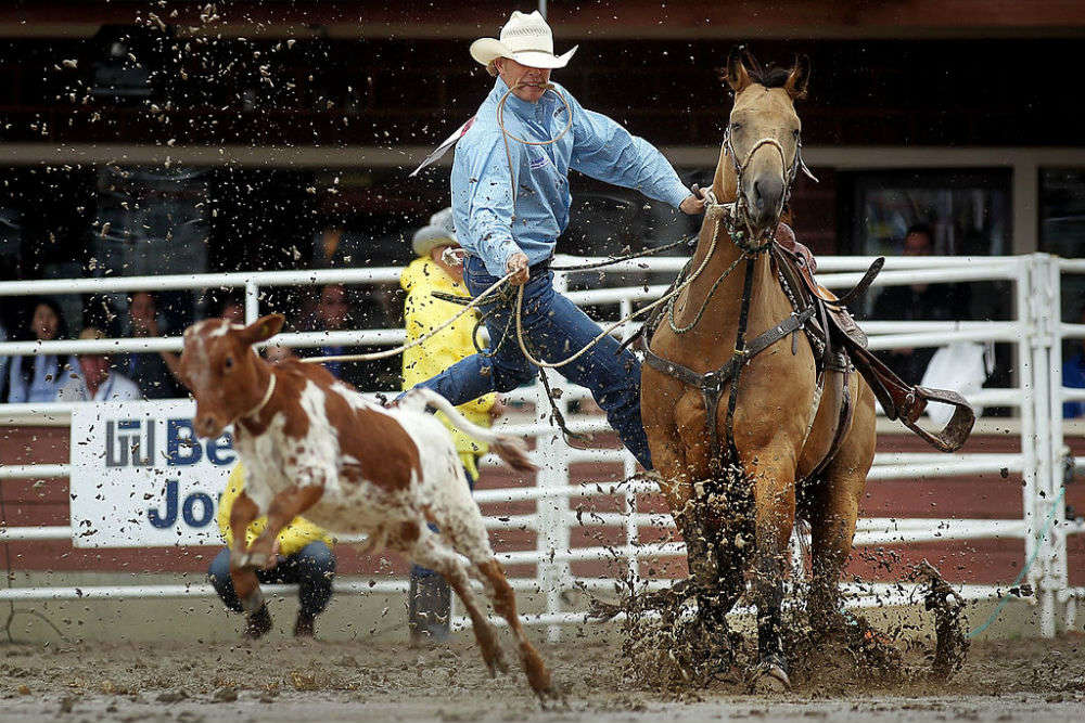 The best things to see and do at the Calgary Stampede