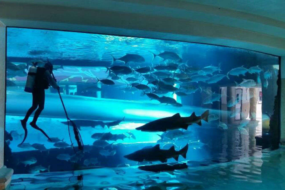 Swim with sharks at The Golden Nugget