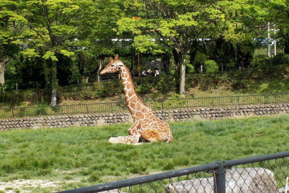 Hiroshima City Asa Zoological Park