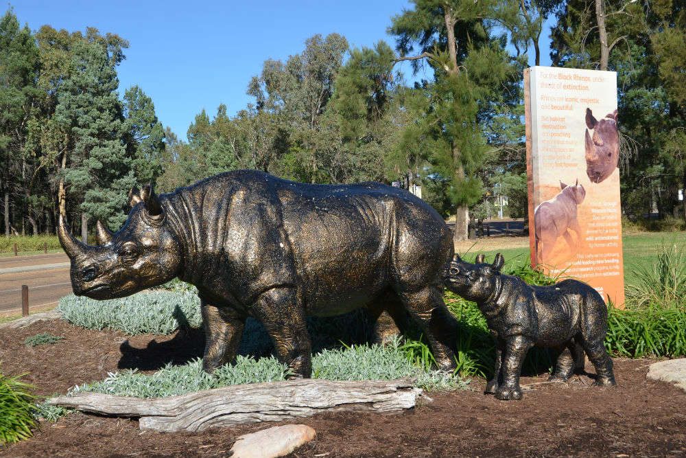 Dubbo Zoo—tracking the trails with African safari