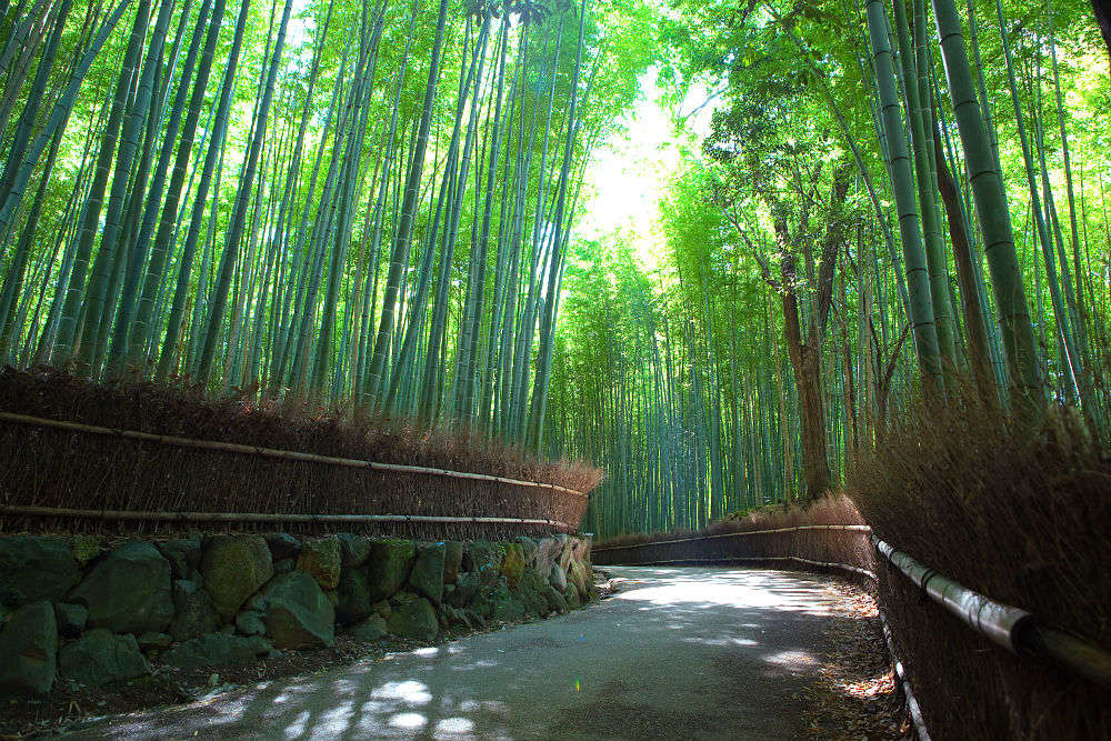 Exploring the alluring world of the Arashiyama Bamboo Forest