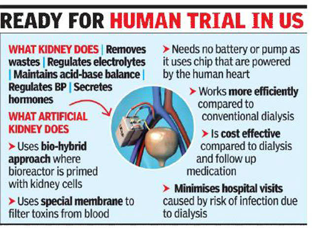artificial kidney: Artificial kidney may hit market by end of decade