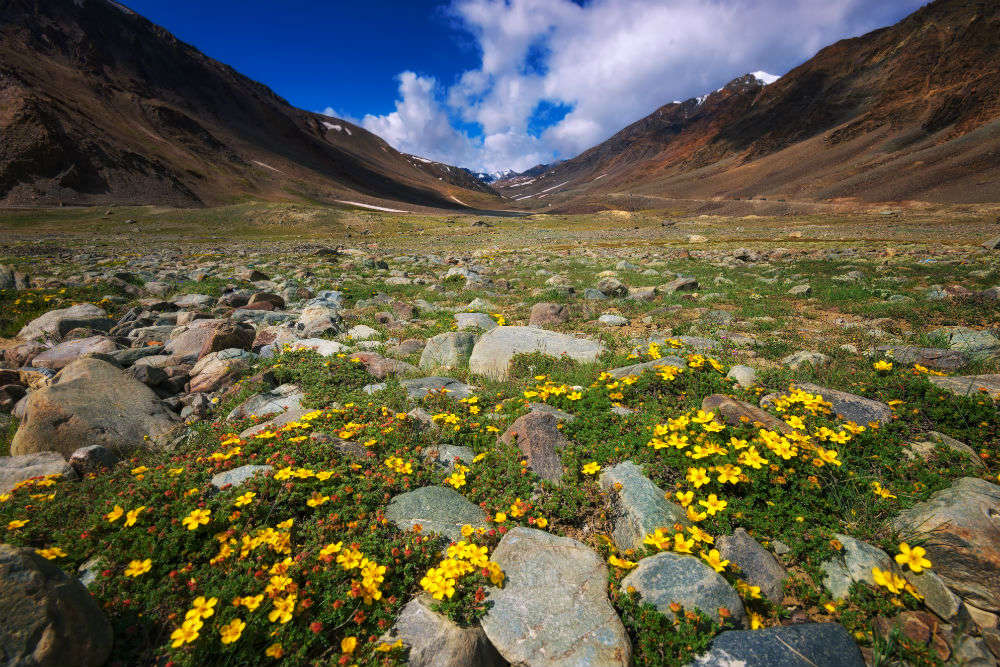 Your complete guide to the Valley of Flowers & Hemkund Sahib