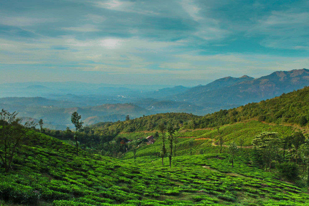 Some of the best things to do as a traveller in Wayanad