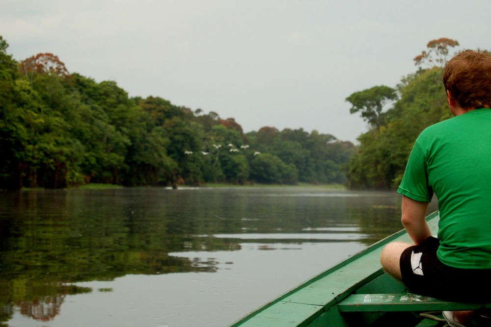Sleep in the rainforest