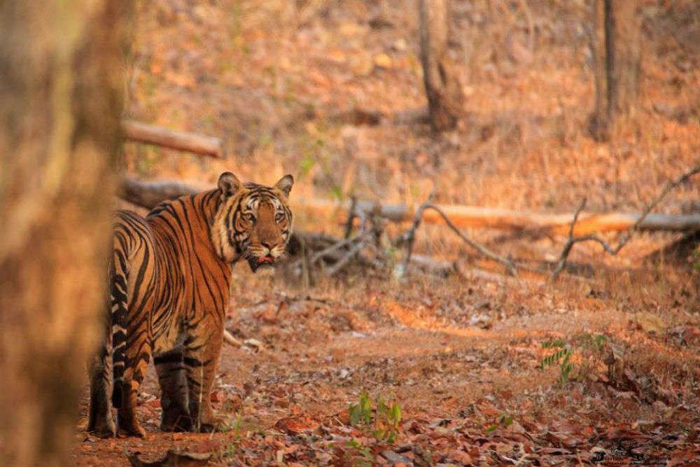 Bhadra Wildlife Sanctuary